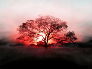 blood-sun