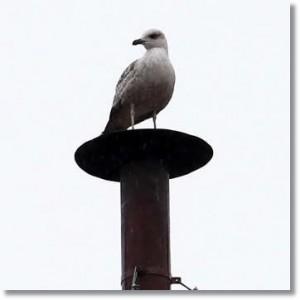 birdonchimneystack